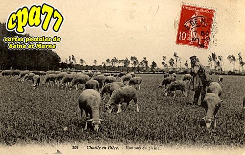 Chailly En Bière - Moutons en plaine
