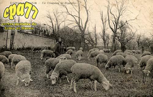 Montgé En Goële - Longperrier - Un troupeau de Moutons