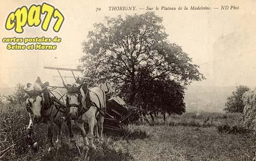 Thorigny Sur Marne - Sur le Plateau de la Madeleine